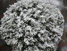 """被大雪""""包装""""过的树木"""