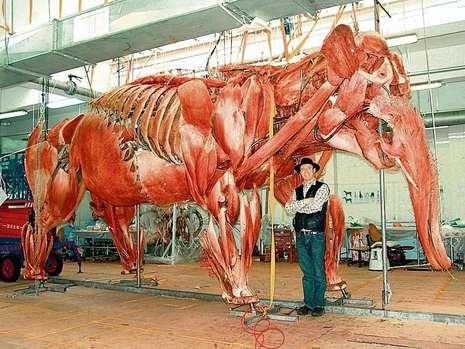 德国解剖学家巩特尔·冯·哈根斯站在