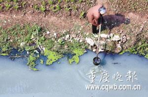 用污水灌溉的菜不少都流入市场,如何监管是个难题。