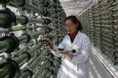 中国利用藻类对抗全球变暖令世界瞩目