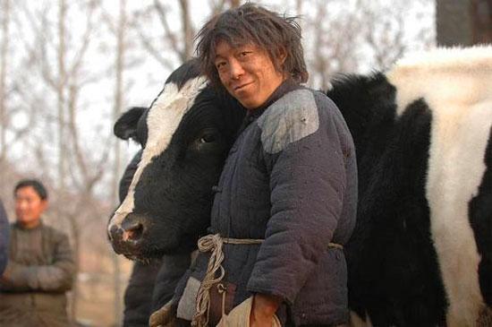 为了与牛建立关系,黄渤每天跟牛说话,给它喂草、刷毛……