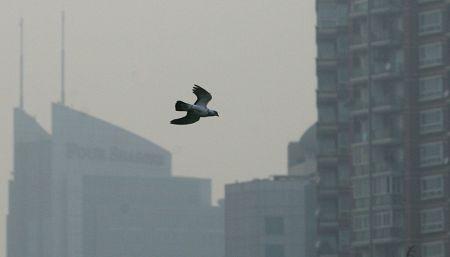 """上海天空昨日轻度污染 但世博时污染几率减少 昨日,一只鸟从人民广场的高楼前飞过。当天,上海空气质量为""""轻度污染""""。早报见习记者 王浩然 图"""