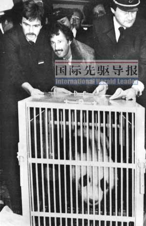 1980年11月5日,大熊猫宝宝和天天抵达法兰克福机场,交由联邦德国西柏林动物园饲养。本报资料图
