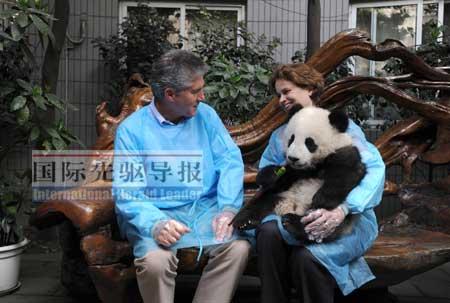 澳大利亚外交部长斯蒂芬・史密斯夫妇十分喜爱来自中国四川的熊猫。法新社