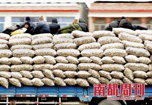 在金乡大蒜产业链上,收入微薄的除了蒜农就是搬运工,他们平均每天的收入在30-50元。