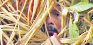 """""""洞穴人""""躲在茅草丛中。"""