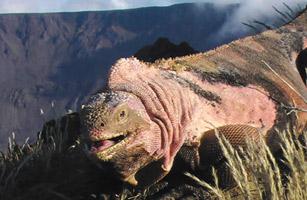 时代周刊2009年十大新物种:史前巨蟒重1吨(图)