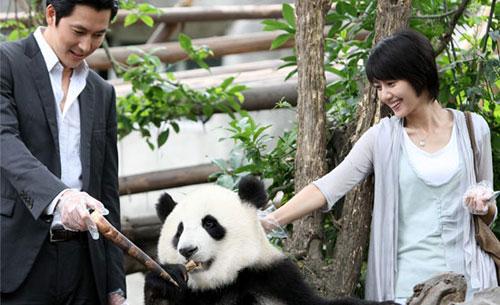 在成都必做的事情之一:和大熊猫亲密接触