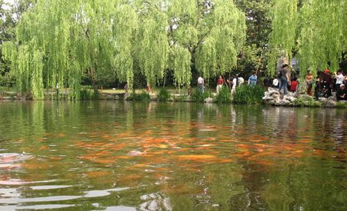 西子湖畔一年四季都是游人如织