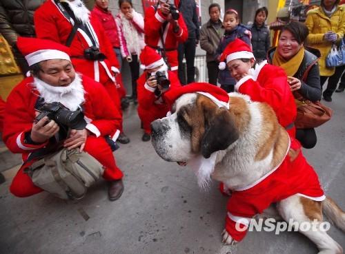 """资料图:12月24日,一场主题为""""快乐自己快乐他人""""的摄影扫街活动在古都河南洛阳进行。50名摄影爱好者身着圣诞老人服装,携""""长枪短炮""""在老城东、西大街快乐""""扫街"""",记录人们面对圣诞老人的神情,与行人合影,给孩童送上糖果文具等圣诞礼物,引发满街欢笑。 中新社发 张晓理 摄"""