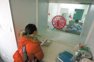 昨日,新桥医院层流病房,陈露隔着玻璃观看病床上的儿子。本报记者 张锦旗 摄