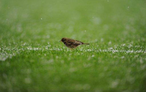 01-小鸟