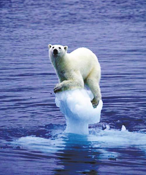 北极熊面临危机