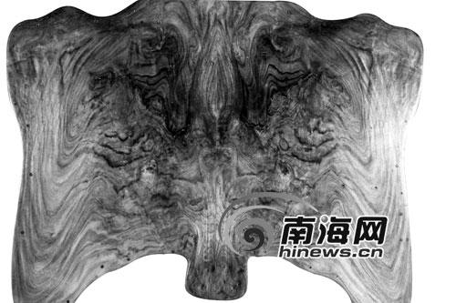 """海口黄花黎收藏协会负责人展示一块""""黄花黎""""芯材,从反面看,图案勾勒出两只大耳朵、两只大眼睛、一条长鼻子。图片由海口黄花黎收藏协会提供"""