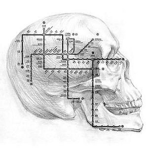 头颅后部结构图
