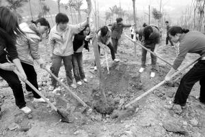 """有代表建议逢喜事植株树,是""""森林重庆""""建设的人人参与、人人共建 本报资料图 马力 摄"""