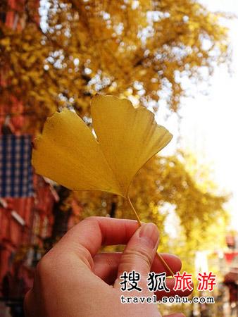 NO.1 大沽路银杏树、街头咖啡馆和Massage