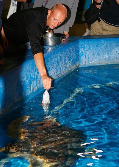 达维登科喂海龟