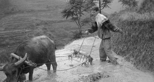 卢安克在乡间犁田