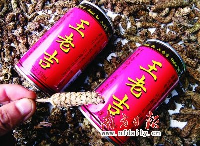 王老吉有望合法添加夏枯草药师提醒妇女儿童应慎用