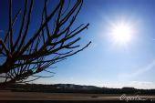 图文:2010年F1首轮试车次日 阳光下前行