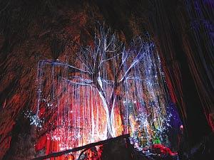 灵魂树再现:日本紫藤  World Travel 世界旅遊