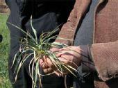 云南省陆良县因旱人畜饮水困难农作物大面积绝收