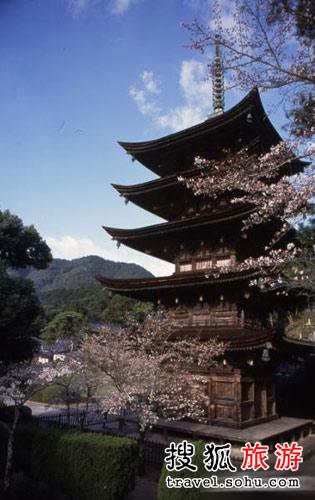 日本山口县香山公园樱花盛开景象