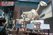 """自然博物馆 跟着达尔文再""""进化""""一把"""