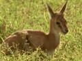 动物犯罪现场:非洲刺客
