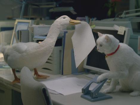 小白猫和大白鸭
