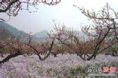 四月平谷桃花海 玩出你的桃花运