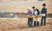 图:贵州黔西南州冬种几乎全部绝收