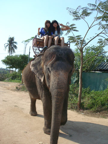 美女骑大象 2010年03月26日17:05