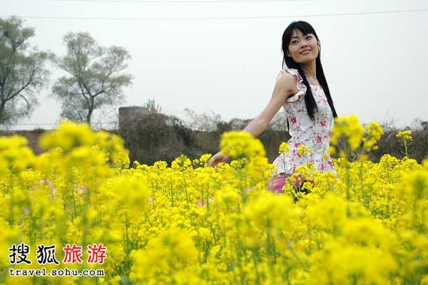 广东油菜花观赏好地 看菜花住树屋