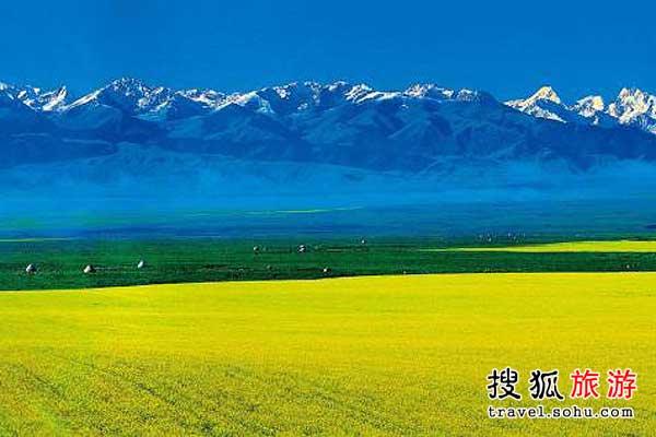 新疆昭苏 西域风情的油菜花