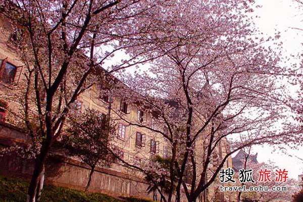 湖北武汉 扑天盖地的樱花雨