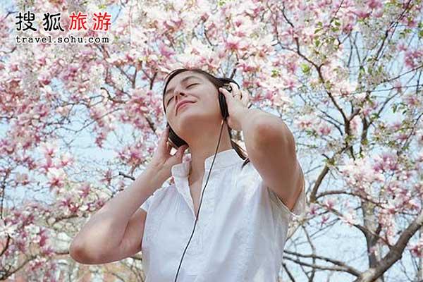 上海 都市里的浪漫樱花