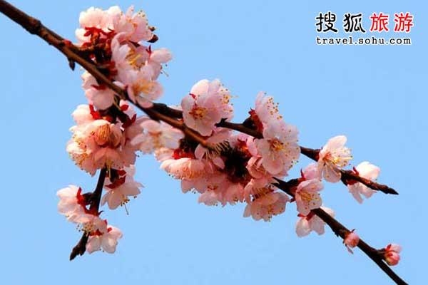 江苏徐州云龙山 一色杏花三十里