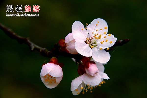 河北省 小楼一夜听春雨深巷明朝卖杏花