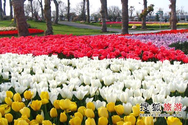 上海市郁金香  展示异域风情