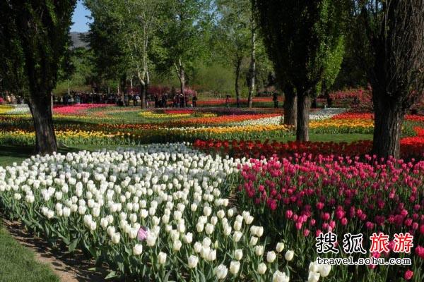 天津市郁金香 鲜花文化盛宴