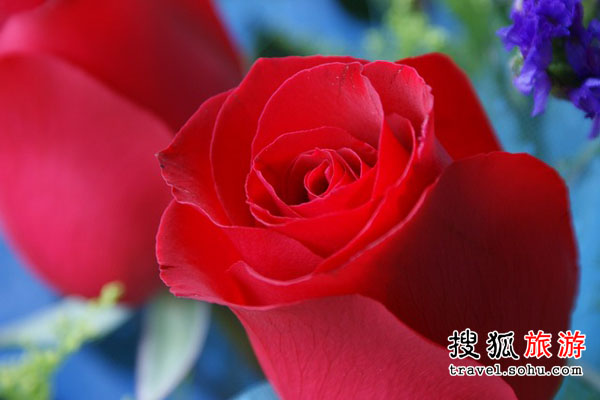 河南省 野玫瑰飘香