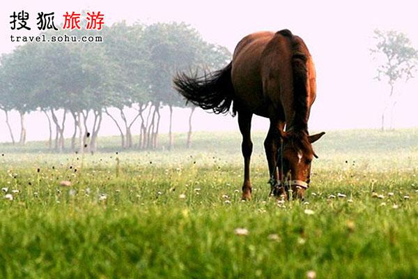 北京周边八大跑马场