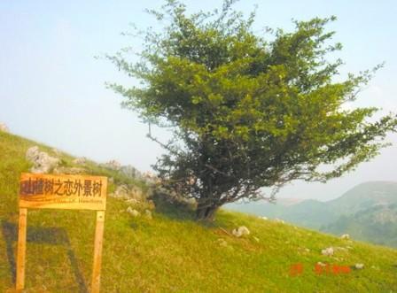 网友提供的《山楂树》外景地