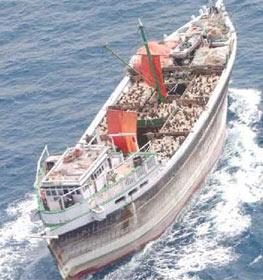 波斯湾海域很常见的独桅帆船。