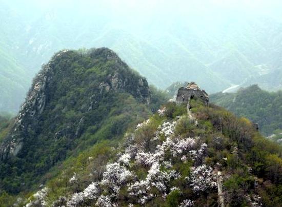 摘要:春天的水泉沟长城,掩映在鲜花丛中,轻风徐来,鲜花摇曵,长城也