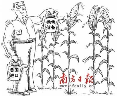 玉米生长过程图解简笔
