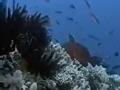经典传奇:天下第一毒 危险大堡礁