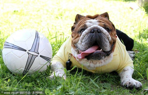 小狗快乐玩起足球